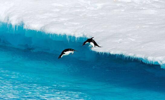 海洋生命 企鹅