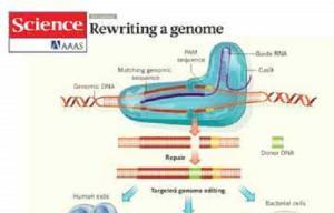 美国首次对人类胚胎开展基因编辑