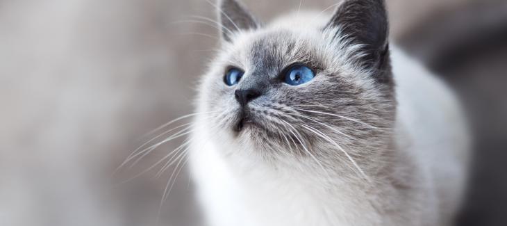 我是猫:我的眼珠不过忽大忽小,而人间的评说却颠倒黑白