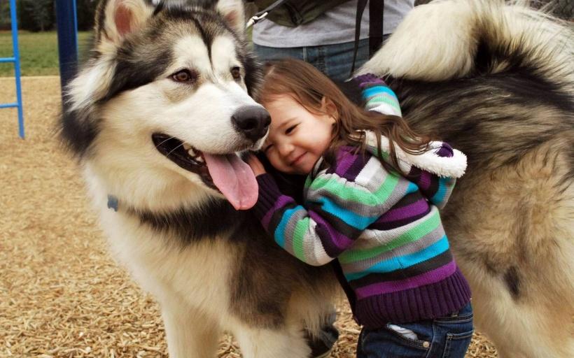 德斯蒙德·莫利斯:人与动物