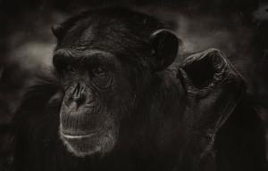 德斯蒙德·莫里斯:(裸猿)起源