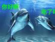 刘翠翠:都说海豚聪明,到底聪明在哪?